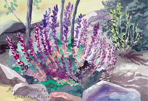 Salvia Blooming in My Garden  - an Original  Watercolor Painting